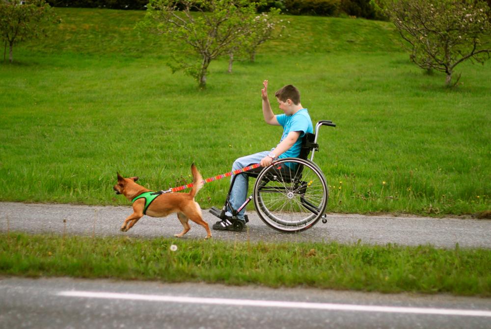 Bilde av en ung gutt i rullestol som er på treningstur med en hund i bånd. Hunden løpet ved siden av gutten.